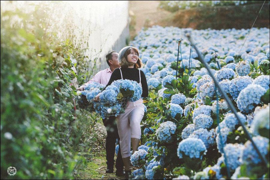 [Review] Vườn hoa Lavender Đà Lạt đẹp như phim Hàn Quốc